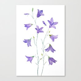 purple wildflower harebell watercolor Canvas Print