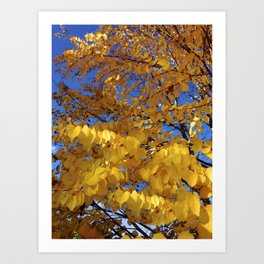 Fall Colors Art Print