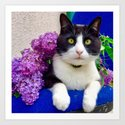 Orazio charming cat in the blue by magicalcats