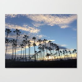 Palms Over the Pacific Canvas Print