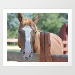 A horse of course Art Print