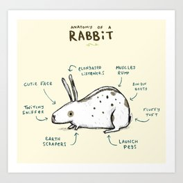 Anatomy of a Rabbit Art Print