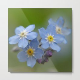 Close-up Forget Me Not - Blue Myosotis Metal Print