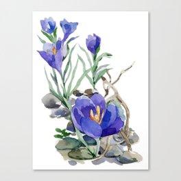 Crocus in Spring Canvas Print