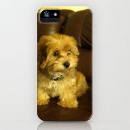 Cute photo of Copper as a puppy iPhone Case