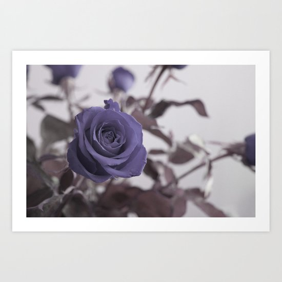 a blue rose for a blue day Art Print