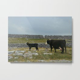 Cows in Ireland Metal Print
