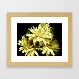 Yellow Chrysanthemum  Aster Flowers Framed Art Print