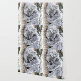 Sleeping Koala Wallpaper