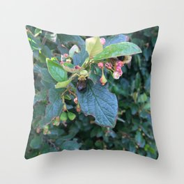 Crab Spider Preys on Bee Throw Pillow