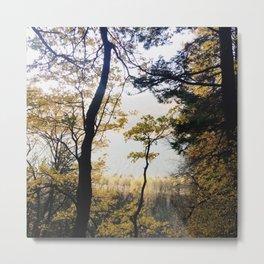 fall time woods Metal Print