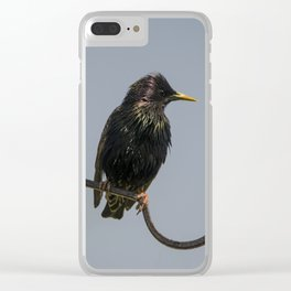 Starling on perch 1 Clear iPhone Case