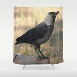 Side View Of A Wild Jackdaw Shower Curtain