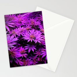 Colorado Marijuana LED Grow Lights Stationery Cards