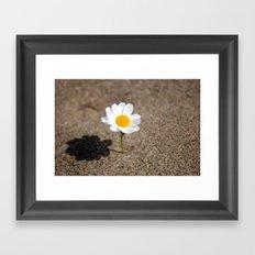 daisy in the sand Framed Art Print
