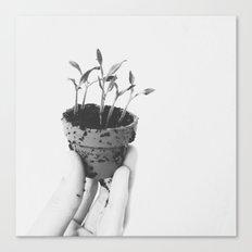 Grow Canvas Print