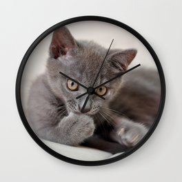 cute kitten Wall Clock