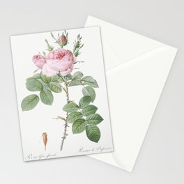 Rosa bifera officinalis also known as Rose of Perfume from Les Roses (1817-1824) by Pierre-Joseph Redoute Stationery Cards