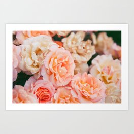 Light Pink Roses Art Print