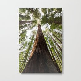 A Big Hendy Woods Redwood Metal Print