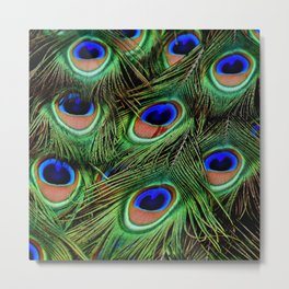 Peacock feathers | Plumes de Paon Metal Print