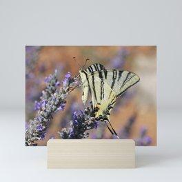 Scarce Swallowtail On Lavender Mini Art Print