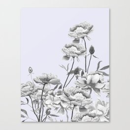 black and white peony i purple background Canvas Print