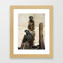 Meerkat Duo Framed Art Print