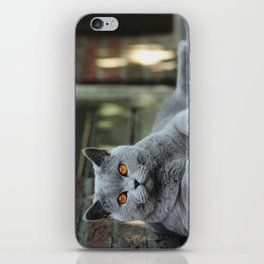 Diesel the cat ! iPhone Skin