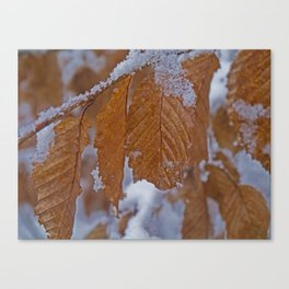 snow and leaves Canvas Print