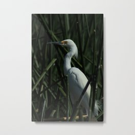 Reeds and a Snowy Egret Metal Print