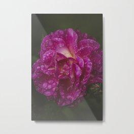 Pink Drops Metal Print