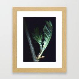 Growing leaf. Framed Art Print