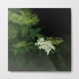 A bunch of lonesome flowers Metal Print