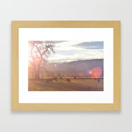 Colorado Cow Sunset Framed Art Print