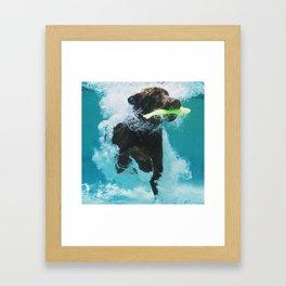 Dog Aquatic Framed Art Print