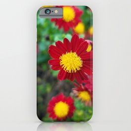 Wildflower of Oreum , Jeju Island, Korea. iPhone Case