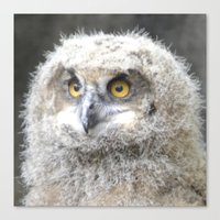 swedish Canvas Prints featuring Swedish owl by ilsephilips