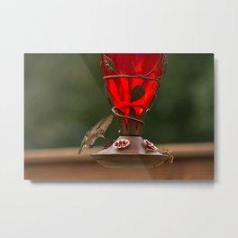 Hummingbird Legend Metal Print