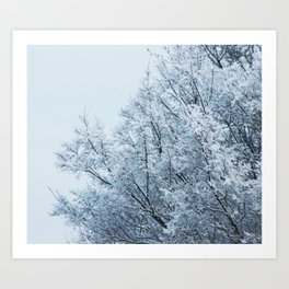 Ice Touched Tree Top Art Print