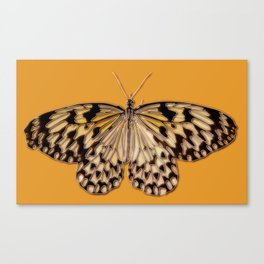 Untitled Butterfly #5 Canvas Print
