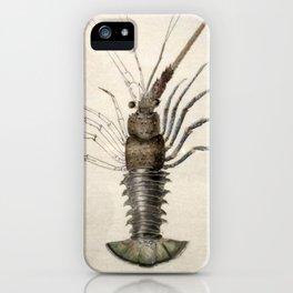 Vintage Lobster Artwork iPhone Case