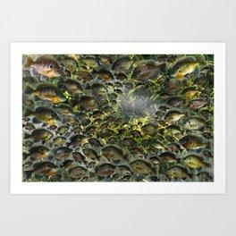 Bluegill Hole Art Print