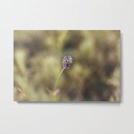 Pure Lavender Metal Print