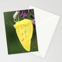 Orange Sulphur Butterfly Stationery Cards