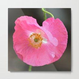 Pretty Pink Poppy Metal Print