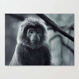 Silver Leaf Monkey Canvas Print