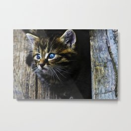 Blue eyed kitten exploring Metal Print
