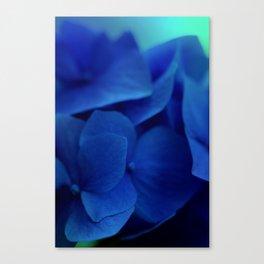 Pretty Indigo Hydrangea Flower  #decor #society6 #buyart Canvas Print