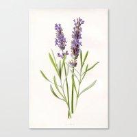 lavender Canvas Prints featuring Lavender by 83 Oranges™